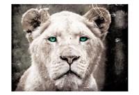 Lioness Look Fine-Art Print