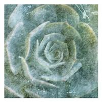 Succulent Through The Fog Fine-Art Print