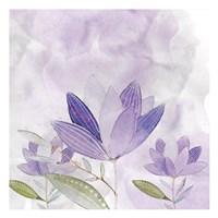 Purple Delight 2 Fine-Art Print