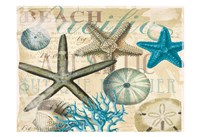 Beach Shells R1 Fine-Art Print