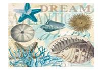 Dream Shells R1 Fine-Art Print