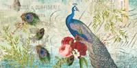 Peacock Blue 1 Fine-Art Print