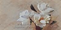 Suddenly Magnolia 2 Fine-Art Print