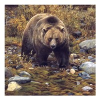 Trailblazer - Grizzly Bear (detail) Fine-Art Print
