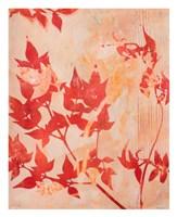 The Scent of Jasmine Fine-Art Print