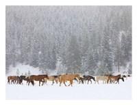 Montana Horses Fine-Art Print