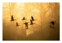 Geese in the Mist Fine-Art Print