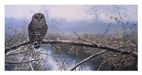 Autumn Mist - Barred Owl Fine-Art Print