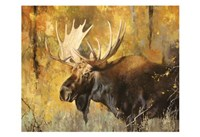 Autumn Moose Study #1 Fine-Art Print