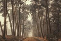 Path of Pines Fine-Art Print