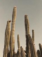 Desert Cacti Fine-Art Print