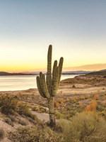 Desert Cactus Sunset Fine-Art Print