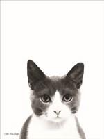 Watercolor Cat Fine-Art Print