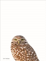 Young Owl Fine-Art Print