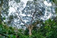 Marantaceae Forest Odzala-Kokoua National Park Congo Fine-Art Print