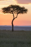 Sunset over Tree, Masai Mara National Reserve, Kenya Fine-Art Print