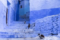 Cats in an Alley, Chefchaouen, Morocco Fine-Art Print