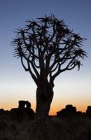 Quiver Tree Forest, Kokerboom at Sunset, Keetmanshoop, Namibia Fine-Art Print