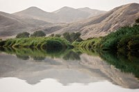 Greenery Along the Banks of the Kunene River, Namibia Fine-Art Print