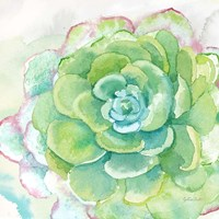 Sweet Succulents IV Fine-Art Print