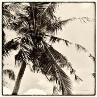 Palm Tree Sepia II Fine-Art Print