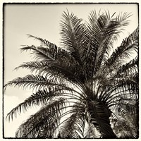 Palm Tree Sepia I Fine-Art Print
