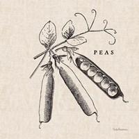 Burlap Vegetable BW Sketch Peas Fine-Art Print