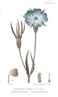 Conversations on Botany III on White with Blue Fine-Art Print