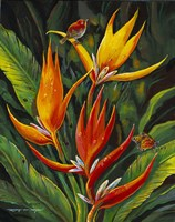Heliconia Augusta Fine-Art Print