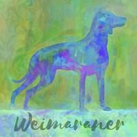 Weimaraner Dog Fine-Art Print