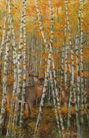 Autumn Stags Fine-Art Print