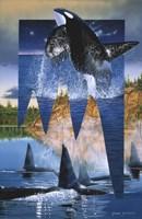 Orca Reflections Fine-Art Print