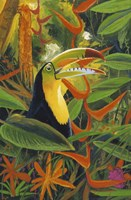 Toucan Colors Fine-Art Print