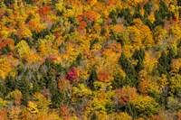 Vermont's Glory Fine-Art Print