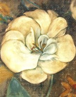 Cream Flower 2 Fine-Art Print