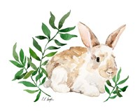 Tan Bunny Rabbit Fine-Art Print