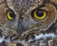 Owl Eyes Fine-Art Print