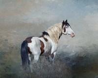 Shaman - S Steens Wild Stallion Fine-Art Print