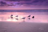 Seagull Beach I Fine-Art Print