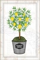 Lemon Topiary Fine-Art Print