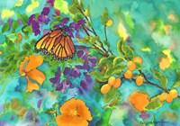 California Monarch Fine-Art Print
