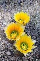 Rainbow Cactus Fine-Art Print