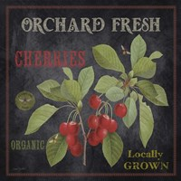 Orchard Fresh Cherries Fine-Art Print