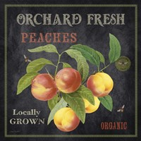 Orchard Fresh Peaches Fine-Art Print