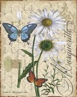 Botanical - Daisey Grande Marqueritte Damask Fine-Art Print