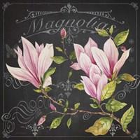 Magnolias 1 Fine-Art Print