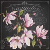 Magnolias 2 Fine-Art Print