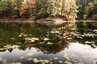 Autumn Lakeside View Of Forest Fine-Art Print