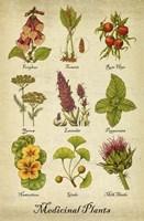 Medicinal Plants Fine-Art Print