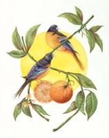 Oranges and Orioles Fine-Art Print